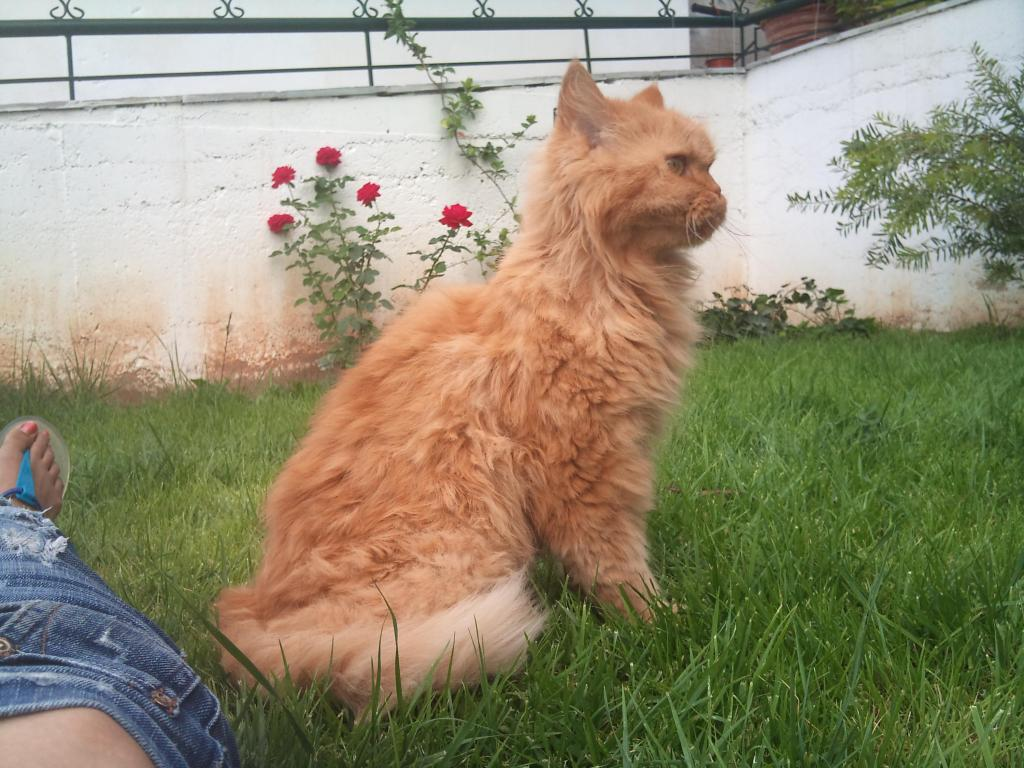 Ο πορτοκαλής Περσούλης των Σερρών, ψάχνει καινούργιο σπίτι....ΥΙΟΘΕΤΗΘΗΚΕ 2012-09-08124530