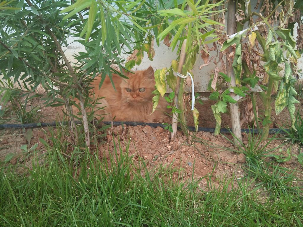 Ο πορτοκαλής Περσούλης των Σερρών, ψάχνει καινούργιο σπίτι....ΥΙΟΘΕΤΗΘΗΚΕ 2012-09-08125304