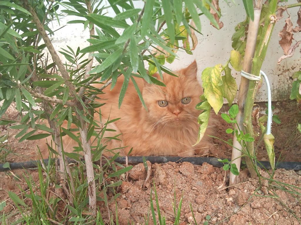 Ο πορτοκαλής Περσούλης των Σερρών, ψάχνει καινούργιο σπίτι....ΥΙΟΘΕΤΗΘΗΚΕ 2012-09-08125318