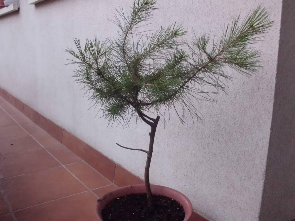 Como formar este pino? CIMG4150-1