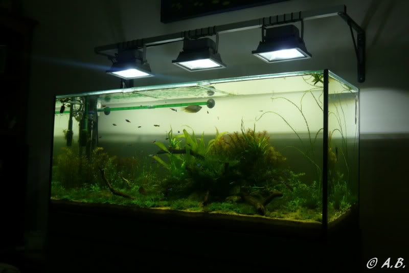 Loaches 4ft ADA style tank & Loaches Shrimp :-) - Page 2 P1060001