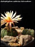 Cactus mini landscaping with Mammillaria Th_IMG_0136