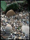 Cactus mini landscaping with Mammillaria Th_IMG_0320