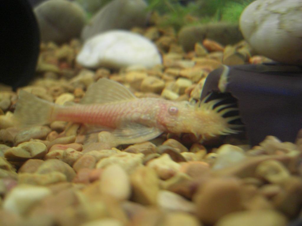 My new albino male 8) 031