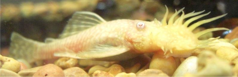 My new albino male 8) White007