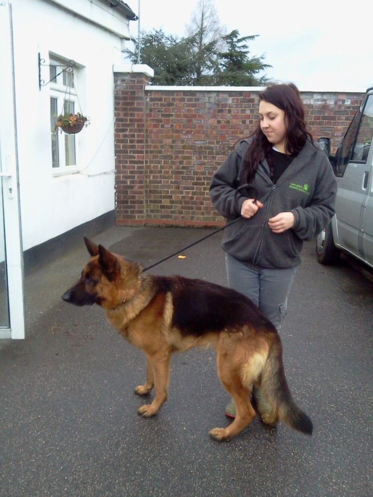 Terry approx 3yr old? homed Photo0013