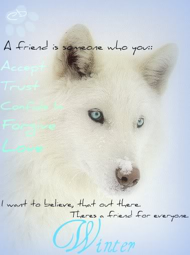 Just look... please? :) Beautiful-White-Wolf-With-Blue-Eyes-wolves-6880194-505-509-1
