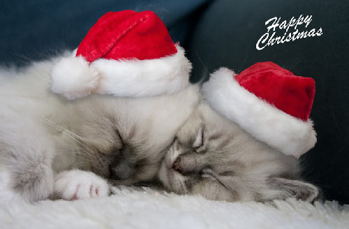 joyeux noel !!! Merry_christmas4