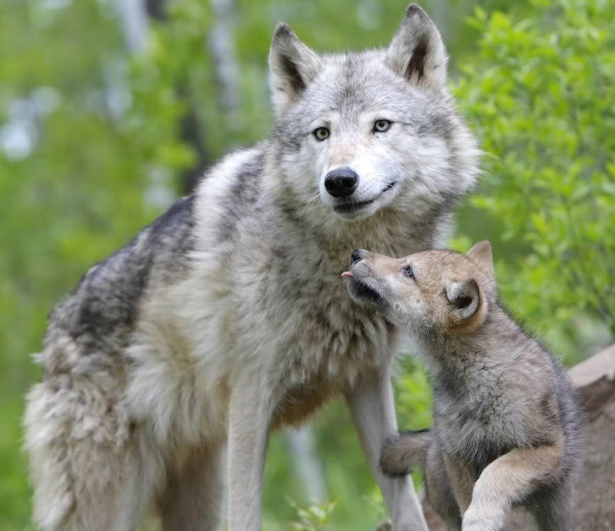 Charity and Nakia's bios Wolfandpup