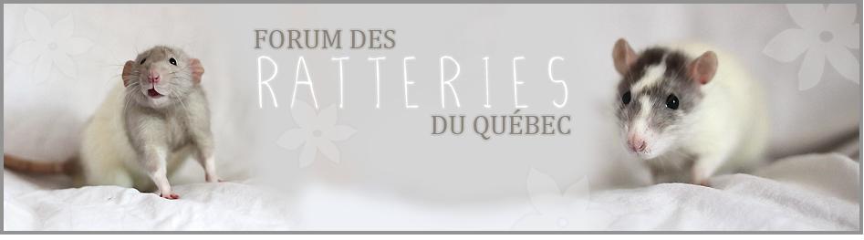Le Forum des Ratteries du Québec