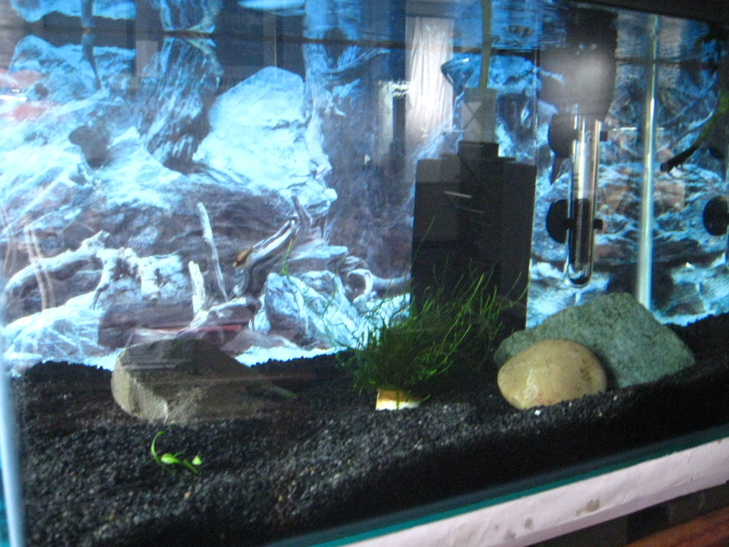 I have 'invisible' baby cories! - Page 2 014_zps9ofb93q2
