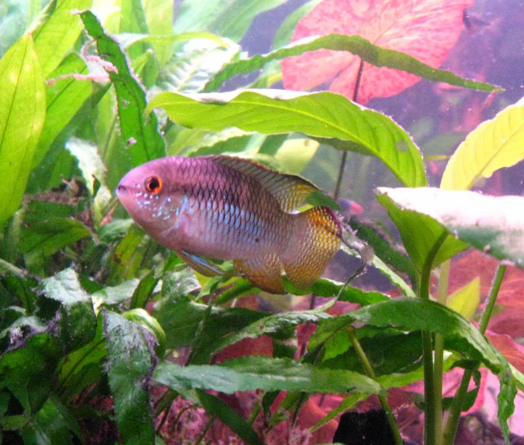 My fish keeping story 8058ee38-5c35-441f-9e3b-9c685e68b527_zps9f40b2a0