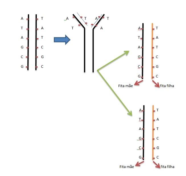 Dúvida numa questão da UERJ DNA