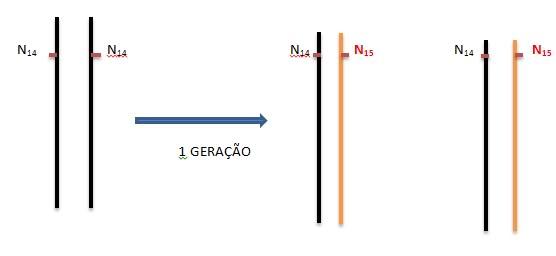Dúvida numa questão da UERJ DNA1