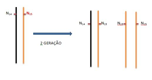Dúvida numa questão da UERJ DNA2