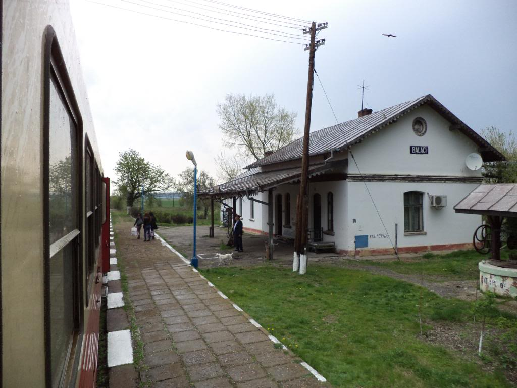 907 : Rosiori Nord - Costesti - Pagina 7 DSC00256_zps26aa0cf8