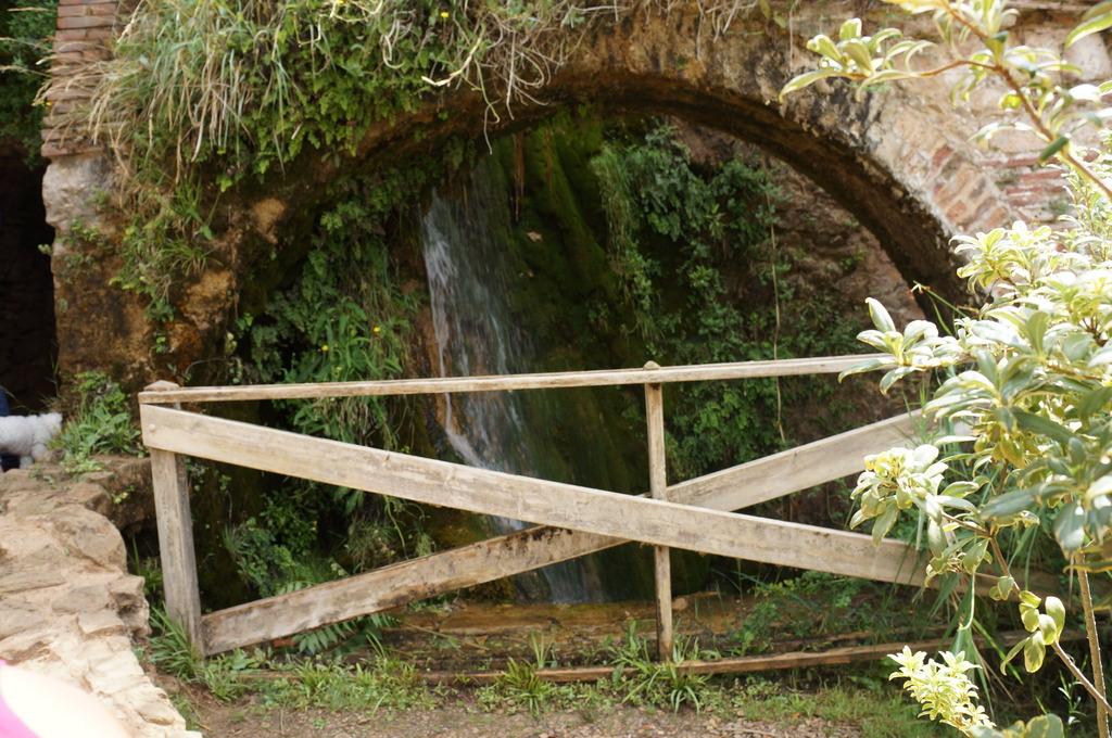 Cascadita de musgos en Mas de Forès (Alcover-Tarragona) DSC00493_zps1xfjihzm