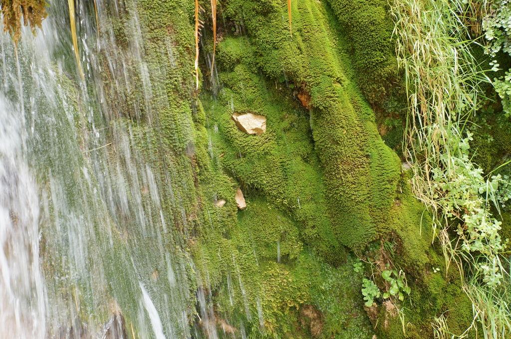 Cascadita de musgos en Mas de Forès (Alcover-Tarragona) DSC00494_zps1jkncoi2