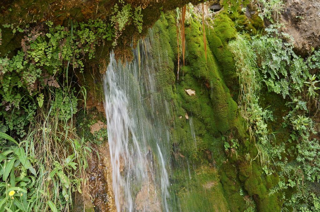 Cascadita de musgos en Mas de Forès (Alcover-Tarragona) DSC00495_zps8mgddw3u