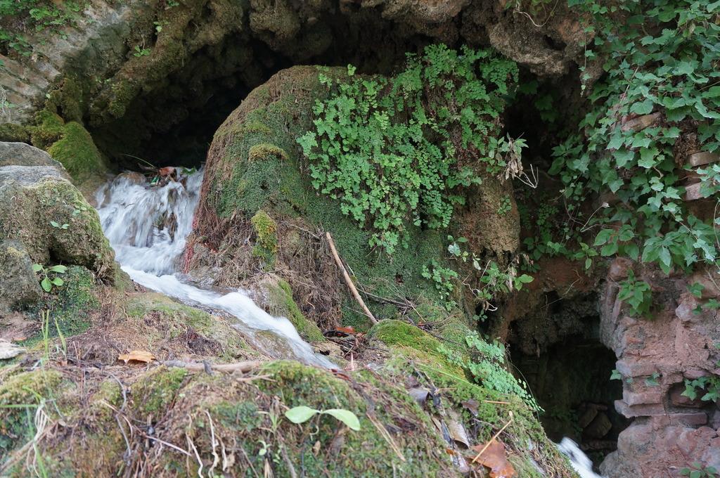 Cascadita de musgos en Mas de Forès (Alcover-Tarragona) DSC00511_zpselaq9ynl