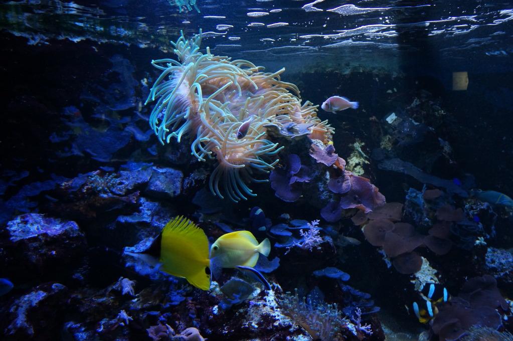 visita al zoo acuario de madrid Acuario11
