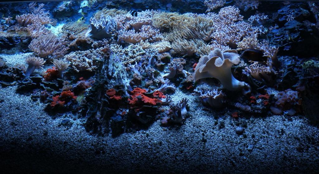 visita al zoo acuario de madrid Acuario4