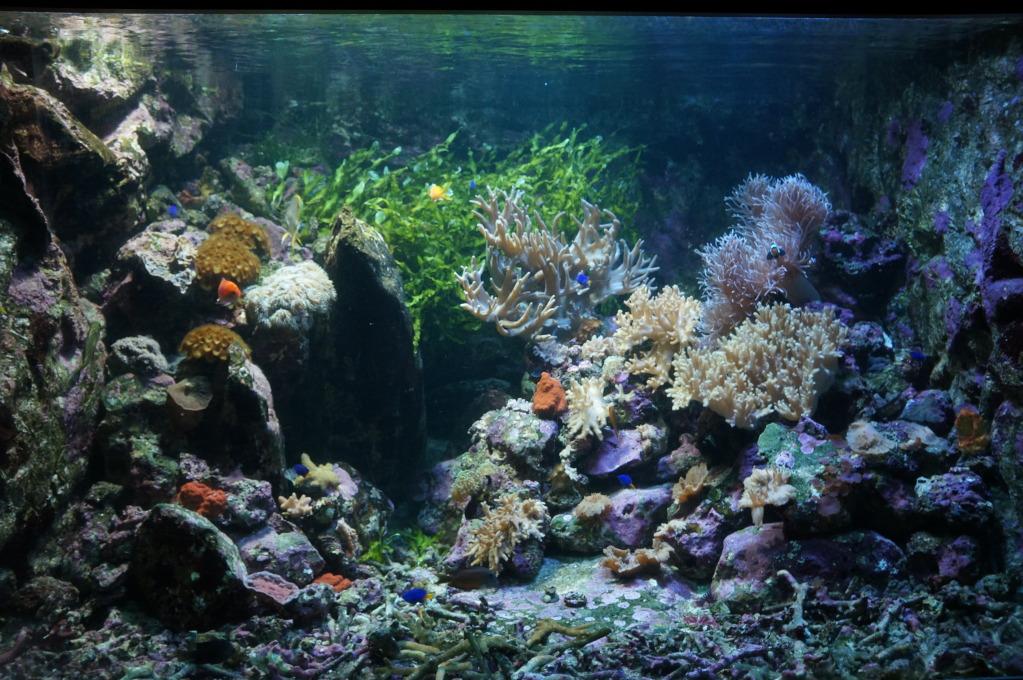 visita al zoo acuario de madrid Acuario8