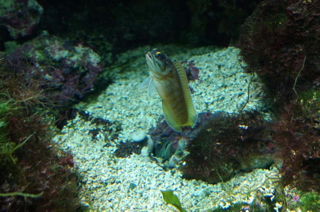 visita al zoo acuario de madrid Concursseptembre