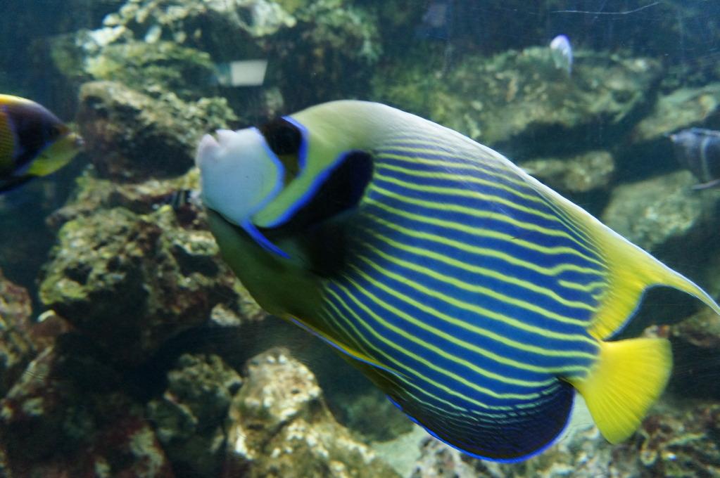 visita al zoo acuario de madrid Pez1