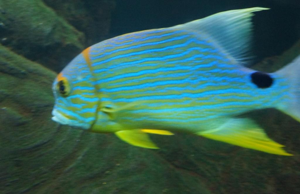 visita al zoo acuario de madrid Pez3