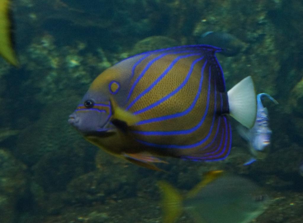 visita al zoo acuario de madrid Pez5
