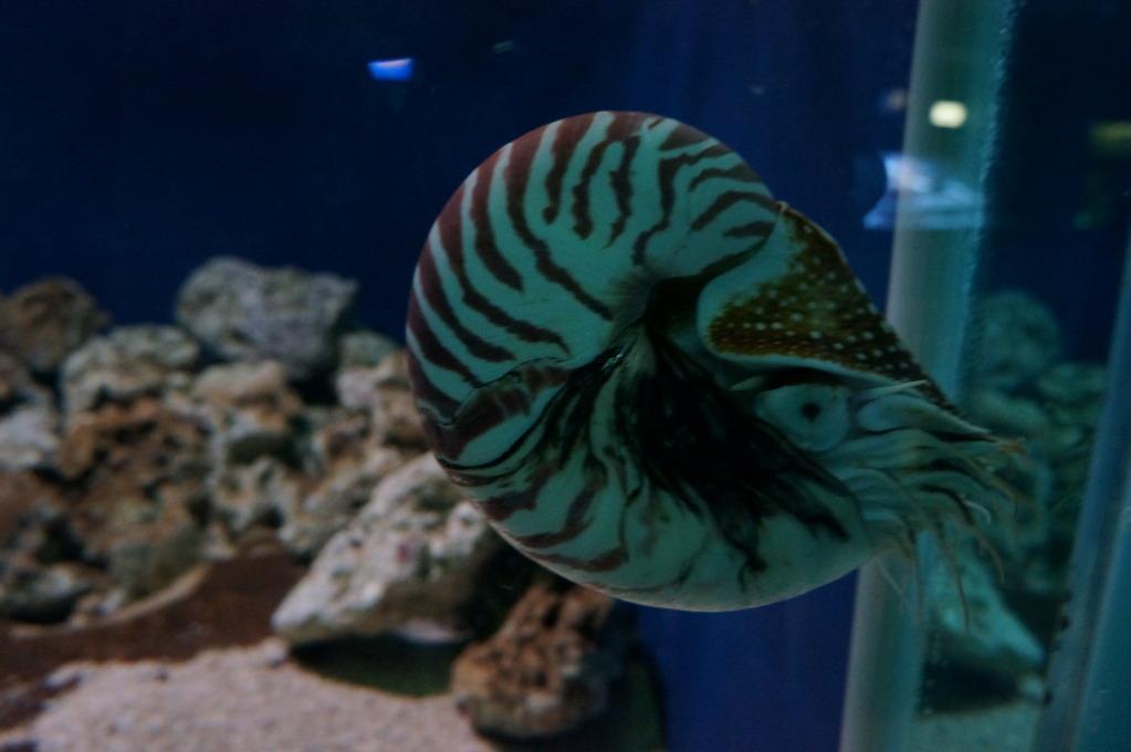 visita al zoo acuario de madrid Pez7