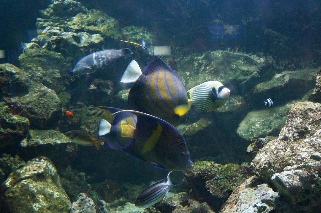 visita al zoo acuario de madrid Pez9