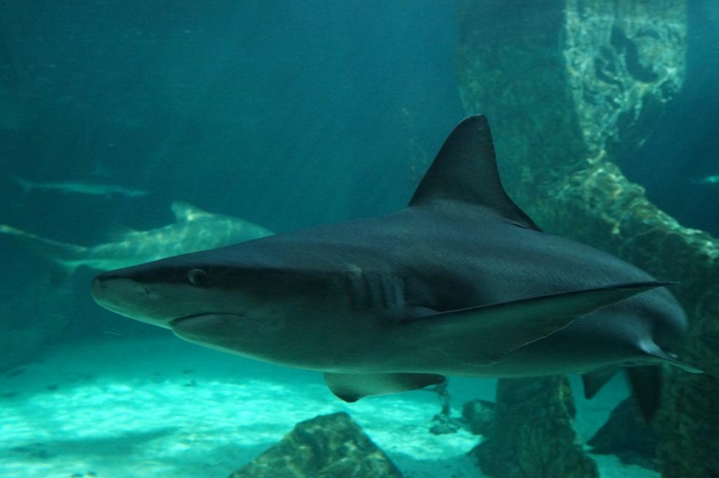 visita al zoo acuario de madrid Tib