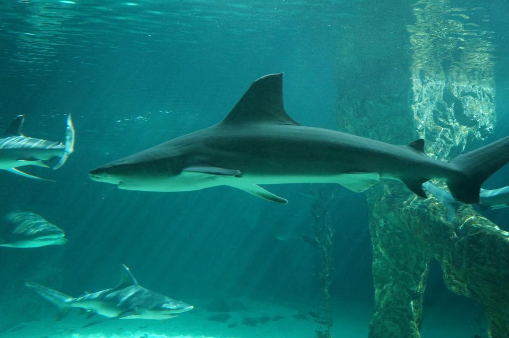 visita al zoo acuario de madrid Tib2