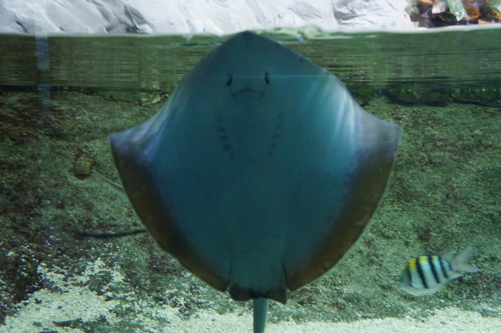 visita al zoo acuario de madrid Tib6