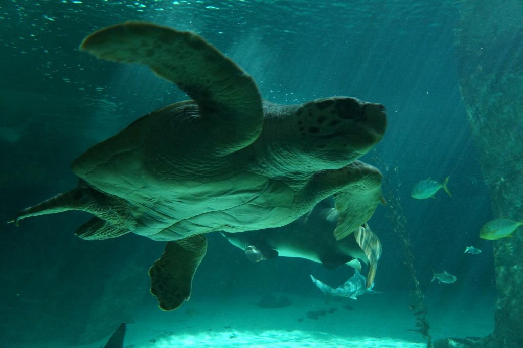 visita al zoo acuario de madrid Tortuga2