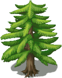 Recopilado de arboles [VX/ACE] Pine-Tree-1