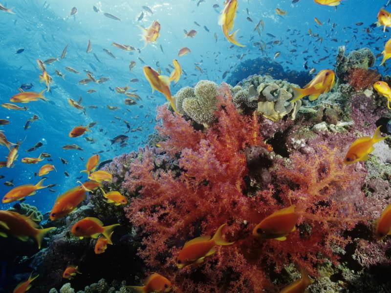 Podvodni cudesni svet Underwater