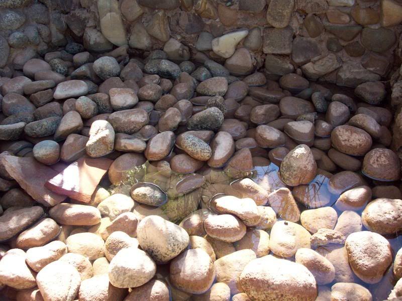 Plage de pierres... Photos1028-3
