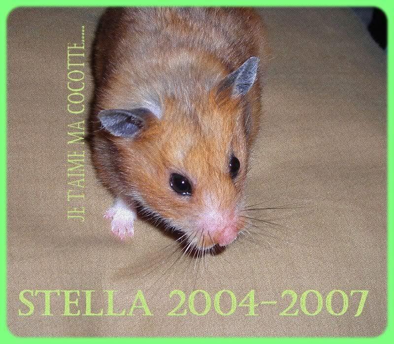 Ma belle petite Stella..... CAT0YTLN