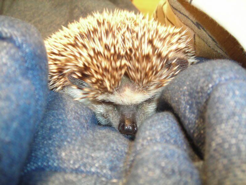 photo de Ernest ( mon pensionnaire) Ernest013