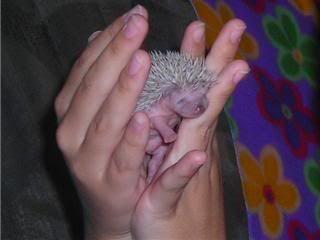 Les bébés ont un mois (photos) Spike