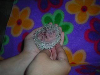 Les bébés ont un mois (photos) Audrey3