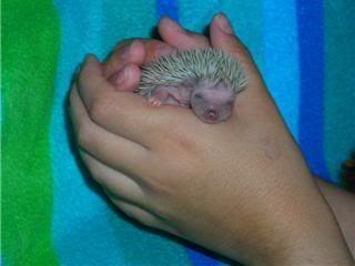 Les bébés ont un mois (photos) Spike2