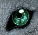 Interesting Images.. - Page 5 Wolf_Eye_by_Ash_Dragon_wolf