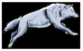 BluuWynter Wolfrungrayscale
