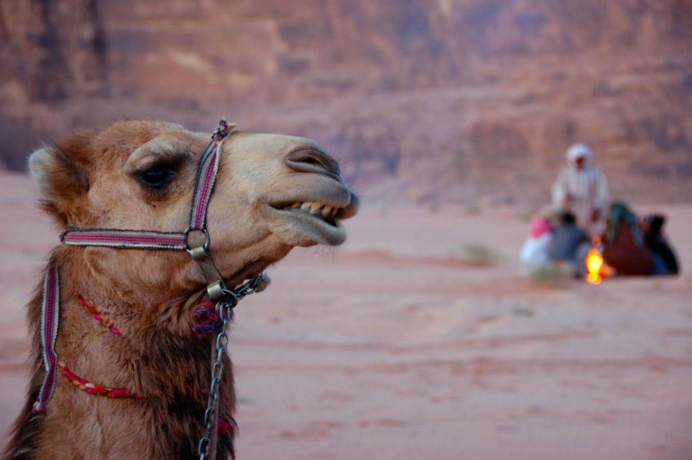 **BM8 Plus** - Page 5 21_camel-and-camp-fire-in-the-desrt-of-wadi-rum_zps761be413