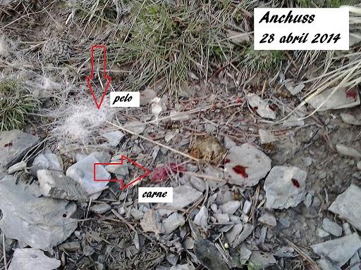 BENASQUE y los Capreolus 2014-04-28204319_zps450acdcc