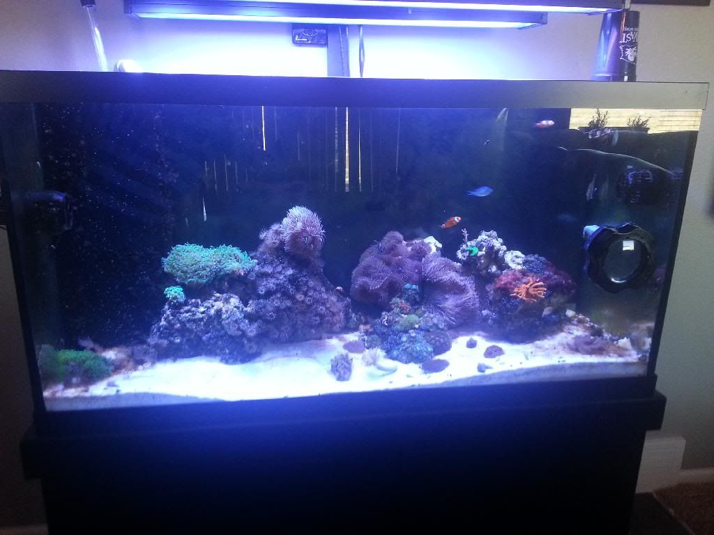DWOlson's Rebuild of the 50 gal(now 90 gal) 20140404_144837_zpswffrbcd4